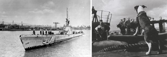 Right: The Halibut and her crew returning from their ninth war patrol. Left: Skeeter, the boat's mascot who joined the crew in 1944, was a bit surly at times, but always alert for trouble.